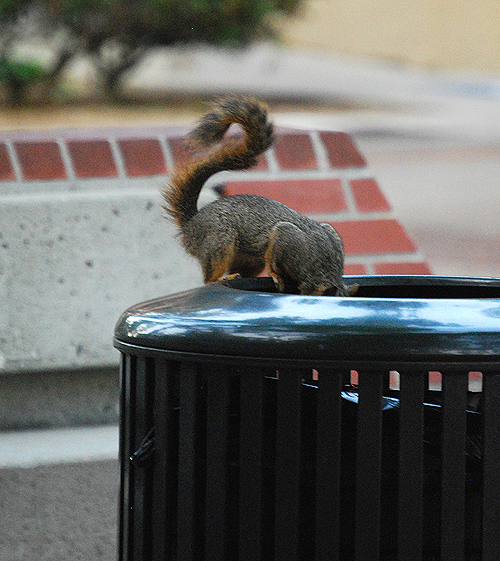 Squirrel USC 2